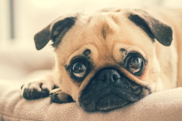 跪舔为何得到爱情?如何避免成为恋爱中的舔狗